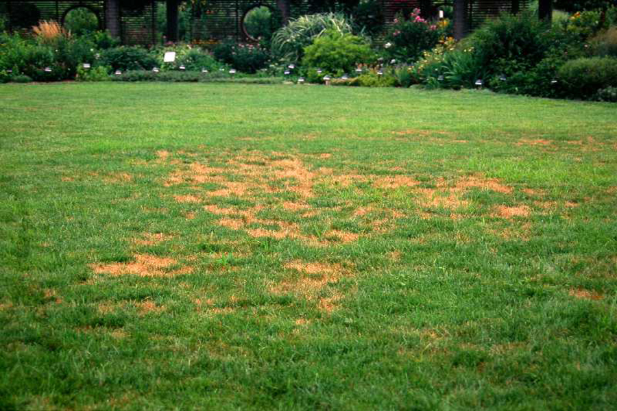 Brown_Patch_of_Lawns194